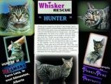 <h5>Hunter</h5><p> </p>