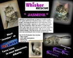 <h5>Jasmine</h5><p> </p>