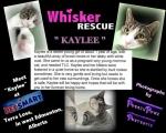 <h5>Kaylee</h5><p> </p>