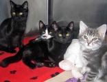<h5>Kittens</h5><p> </p>