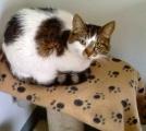 <h5>Kitty</h5><p> </p>