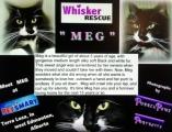 <h5>Meg</h5><p> </p>