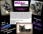 <h5>Nora</h5>