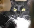 <h5>Sylvester</h5><p> </p>