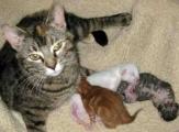 <h5>Sweetie & kittens</h5><p> </p>