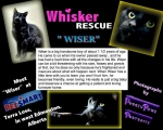 <h5>Wiser</h5><p> </p>