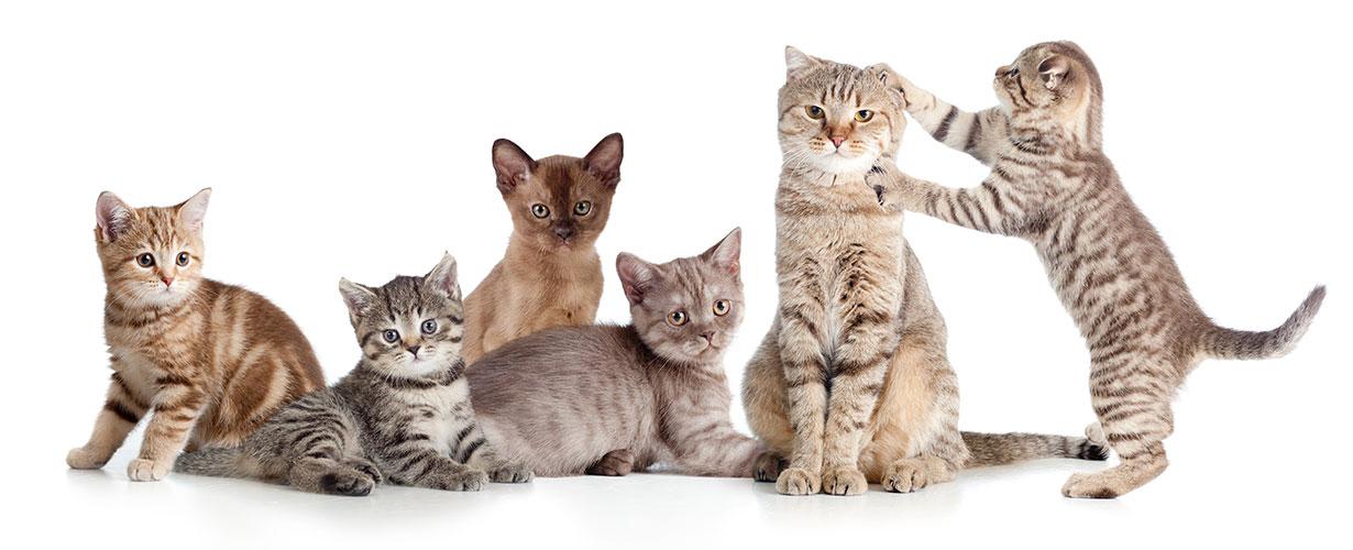 thankyou-cats